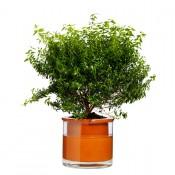 pot de plantes avec bac eau