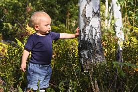enfant dans une forêt de bouleaux scandinaves